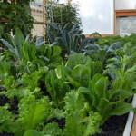 Sustainable Indoor Gardening Products Manufacturer & Retailer #1311