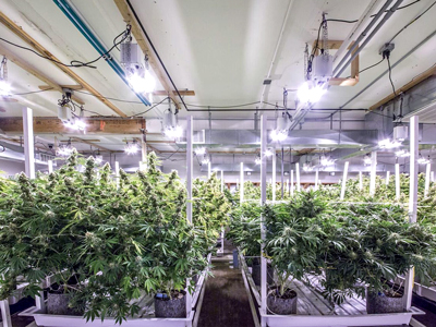 Cannabis Grow Facility